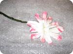28_alle_bloembladeren_geknipt